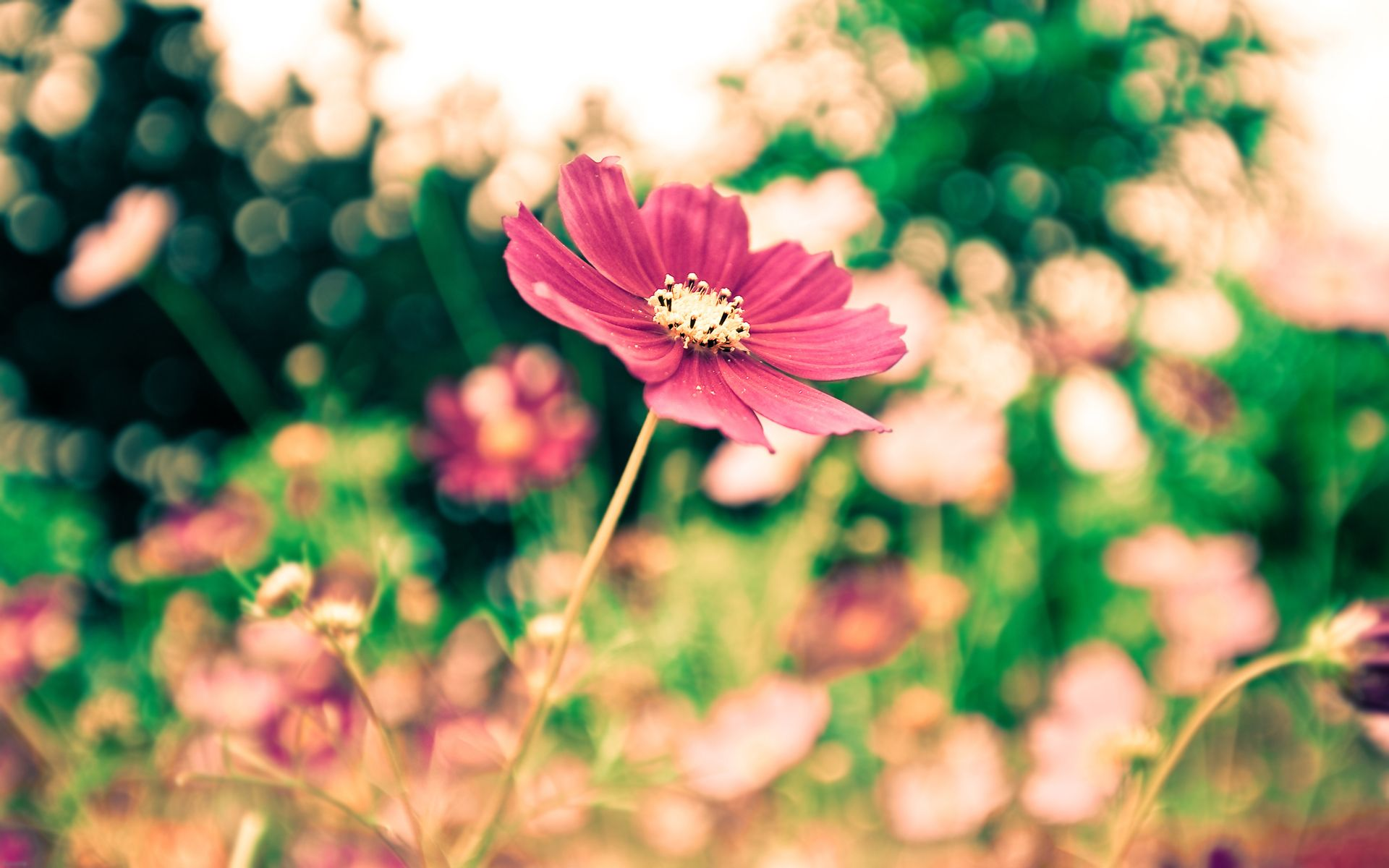 Mood Flower Wallpaper Macro Picturesque Bokeh Picturesboss