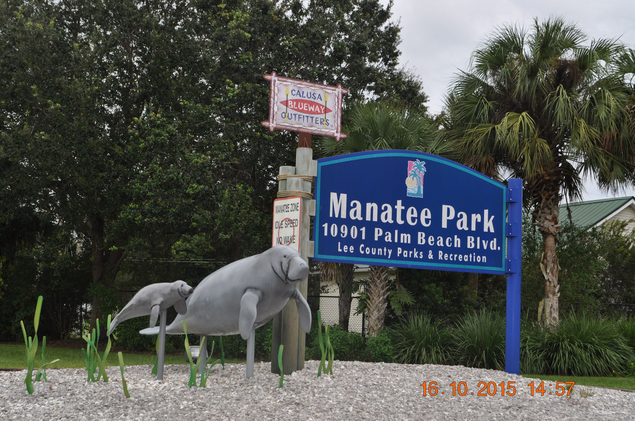 Craigslist Fort Myers Community Pets - Wayang Pets