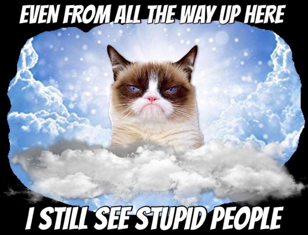 Photo of Grumpy Cat People 😾🙀