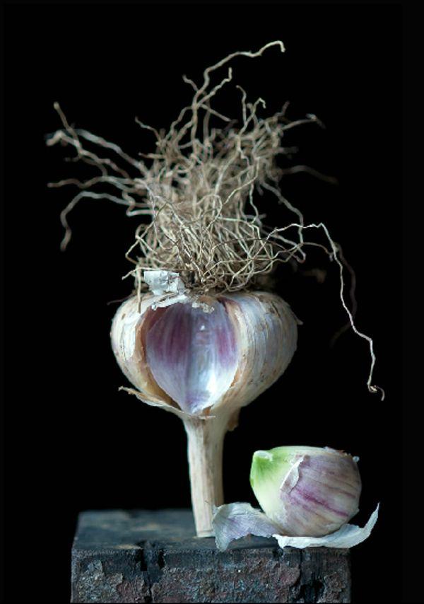 """""""Garlic"""" by photographer, Lynn Karlin."""
