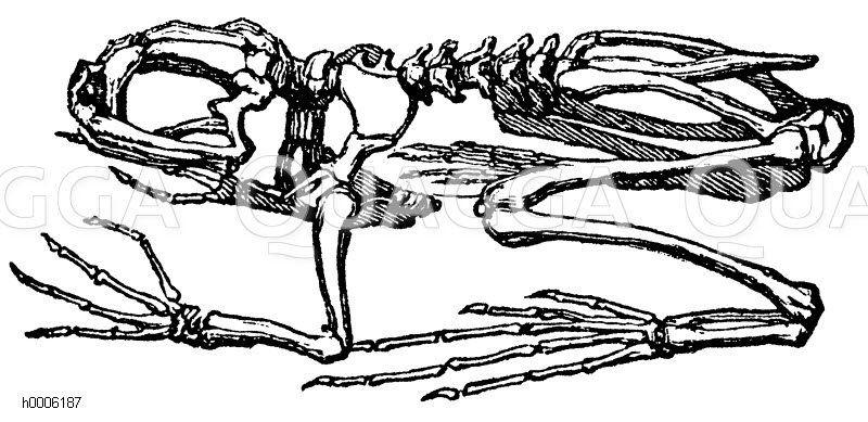 Frosch Skelett In 2020 Skelette Illustration Und Zeichnungen