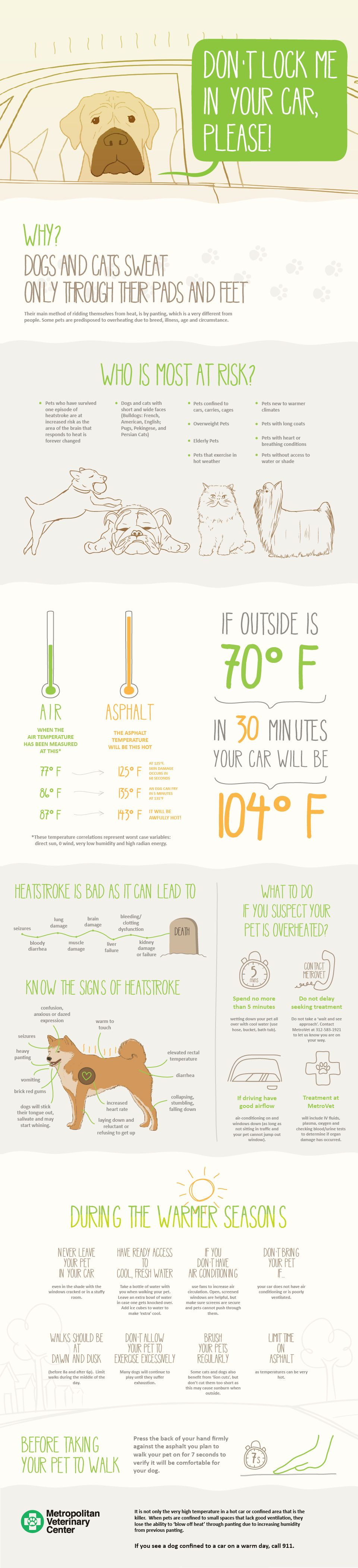 Caring For Pets In Warm Weather Visual Ly Pets Dog Infographic Pet Health