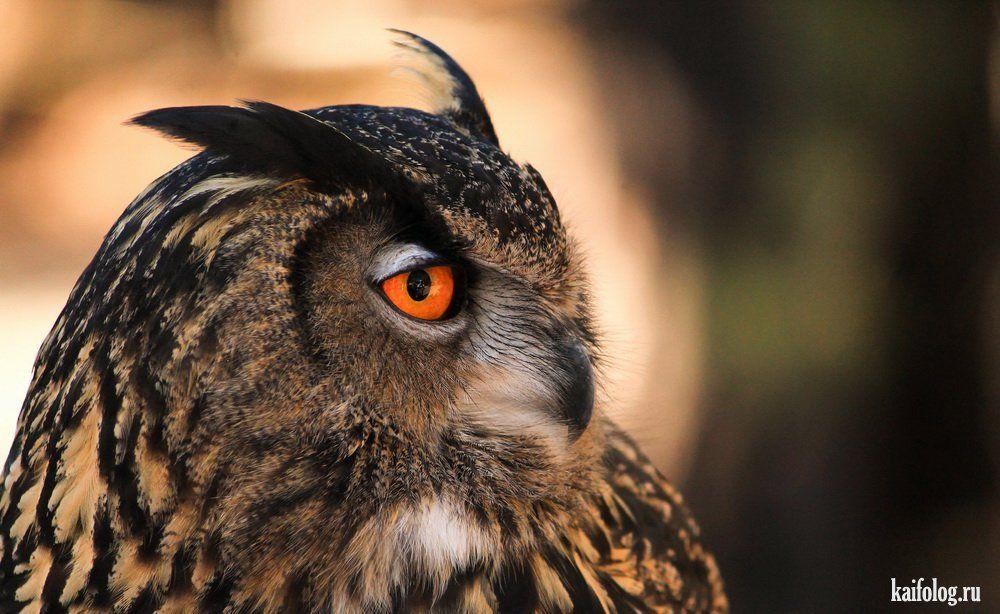 Самые красивые фотографии (60 фото) в 2020 г   Чучело совы ...