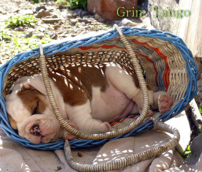 So Adorable Ruff Ruff Cute Dogs Bulldog Puppies Cute Dogs