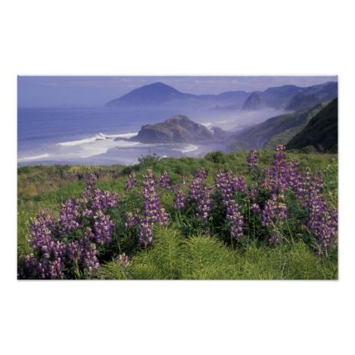 Usa Oregon Nesika Beach Lupine And Poster