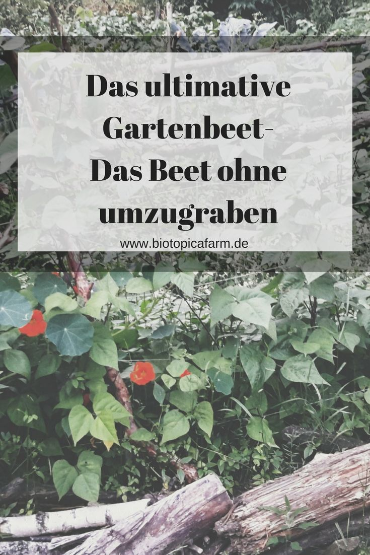 das ultimative gartenbeet ohne umzugraben garten gestalten pinterest gartenbeet garten. Black Bedroom Furniture Sets. Home Design Ideas