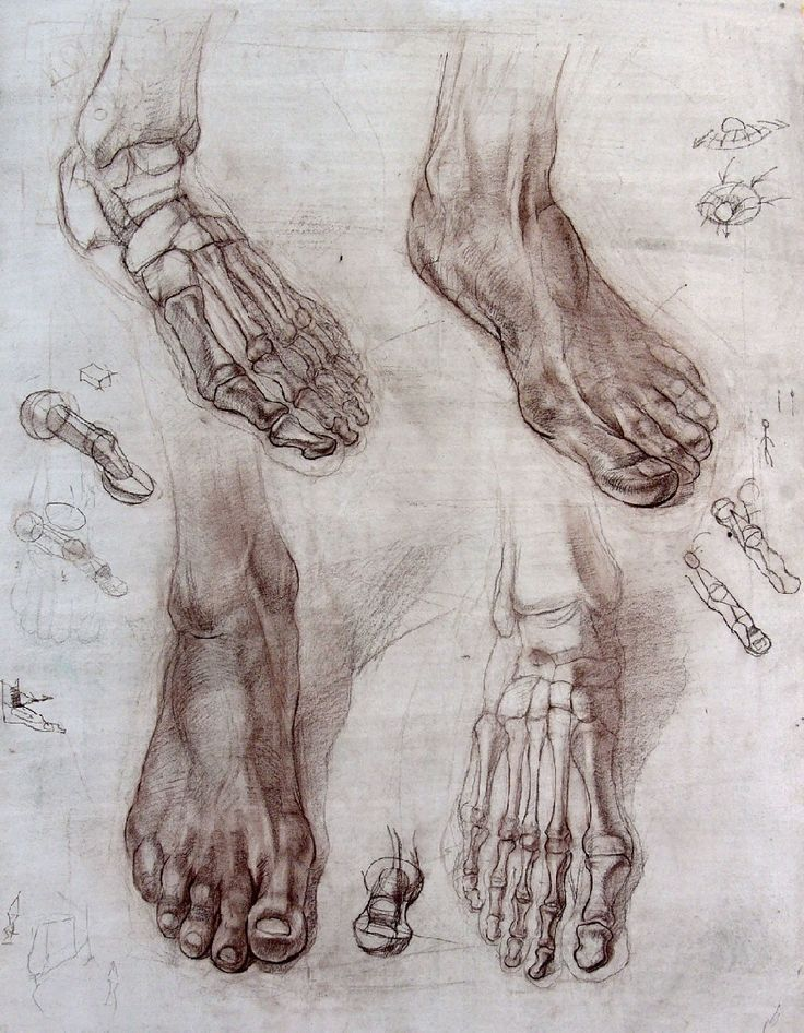 foot bones — anatomy studies, drawings | Sketch | Pinterest ...