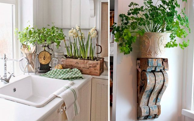Ideas originales para decorar la cocina con plantas plantas plants trees and - Ideas originales para decorar ...