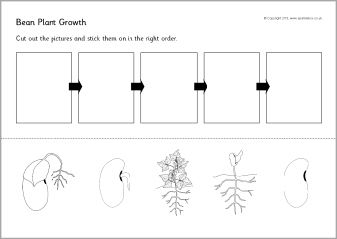 Bean plant growth sequencing sheets (SB9535) - SparkleBox ...