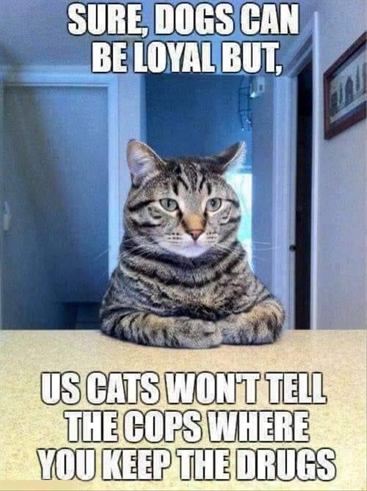 Your Caturday Will Get So Much Better With These Cat Memes Cat Quotes Funny Funny Animal Quotes Funny Animal Memes