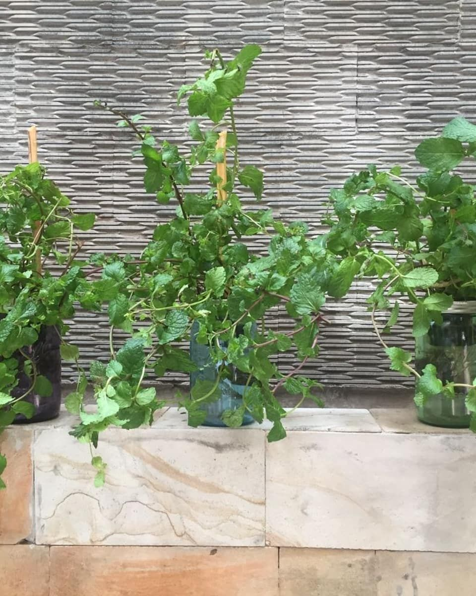 What Are Hydroponic Plants And How They Are Different Than 400 x 300