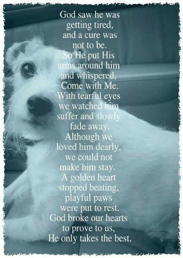 Bitsy 12 12 2014 Dog Loss Quotes Dog Poems Pet Remembrance