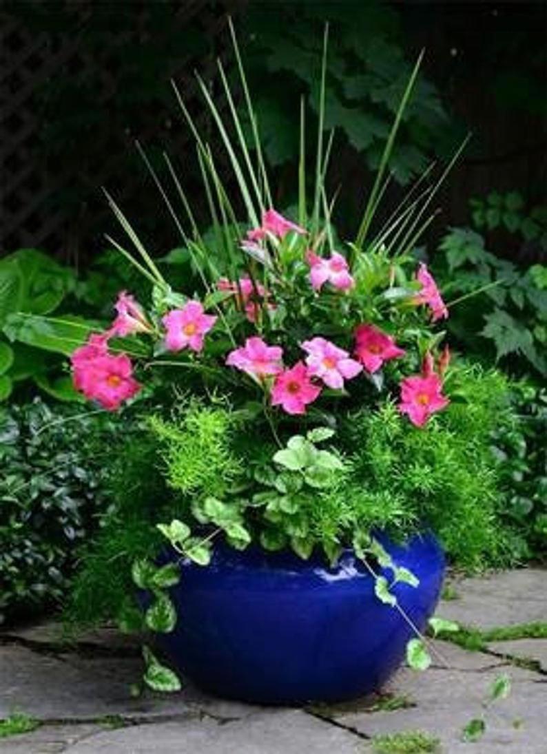 #PlantContainerideas
