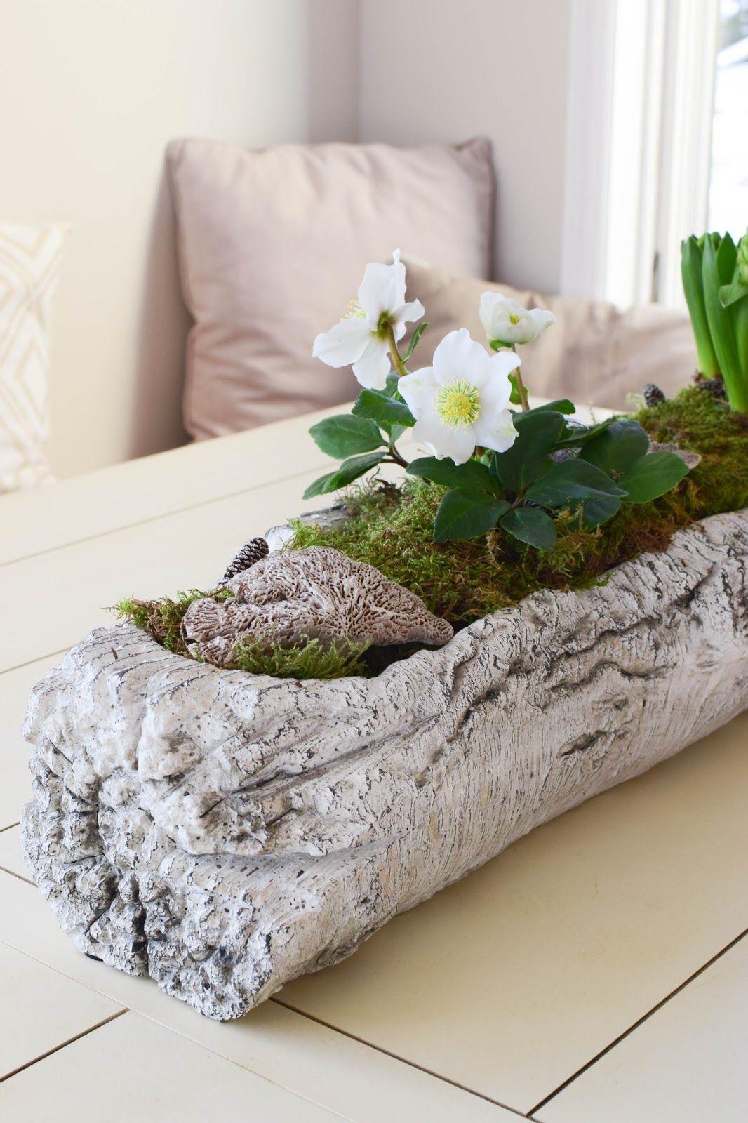 ein erster hauch von fr hling in 2018 mit christrosen und hyazinthen unique garden ideas. Black Bedroom Furniture Sets. Home Design Ideas