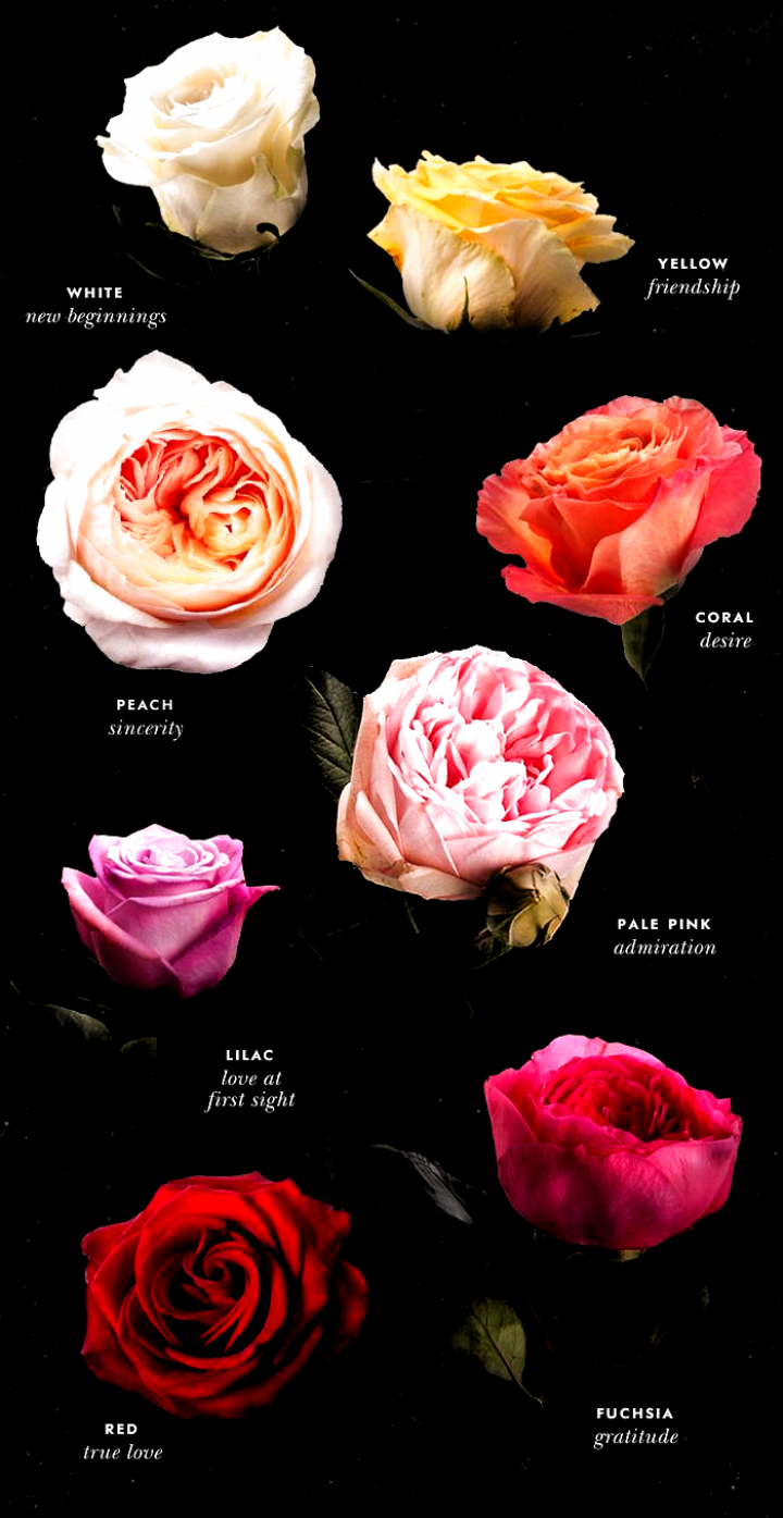 5 Things To Know When Shopping Our Roses Rose Color Meanings Flower Meanings Rose Color