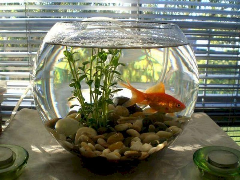 46 Creative Indoor Water Garden Ideas For Best Indoor Garden Solution Decorhit Com Indoor Water Garden Garden Solutions Water Garden