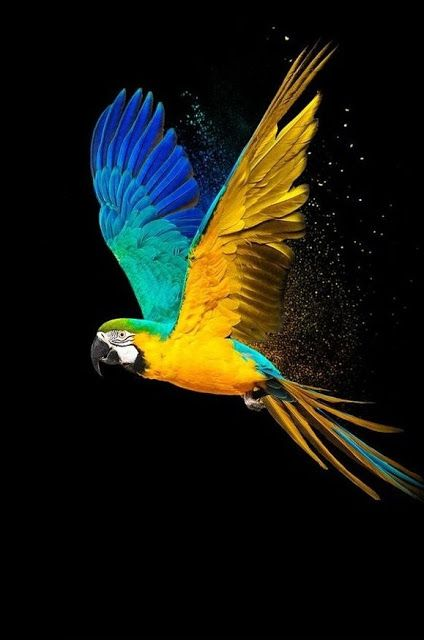 Top 30 Best Hd Wallpaper Images For Android Mobiles Beautiful Bird Wallpaper Parrot Wallpaper Bird Wallpaper