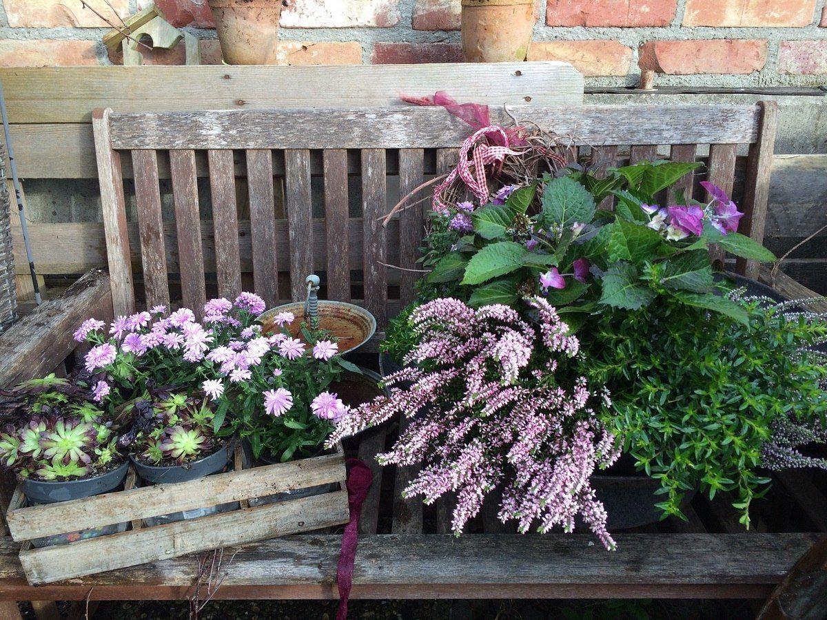 Herbstbepflanzung Für Kübel Und Balkon Garten Sie Werden Neu