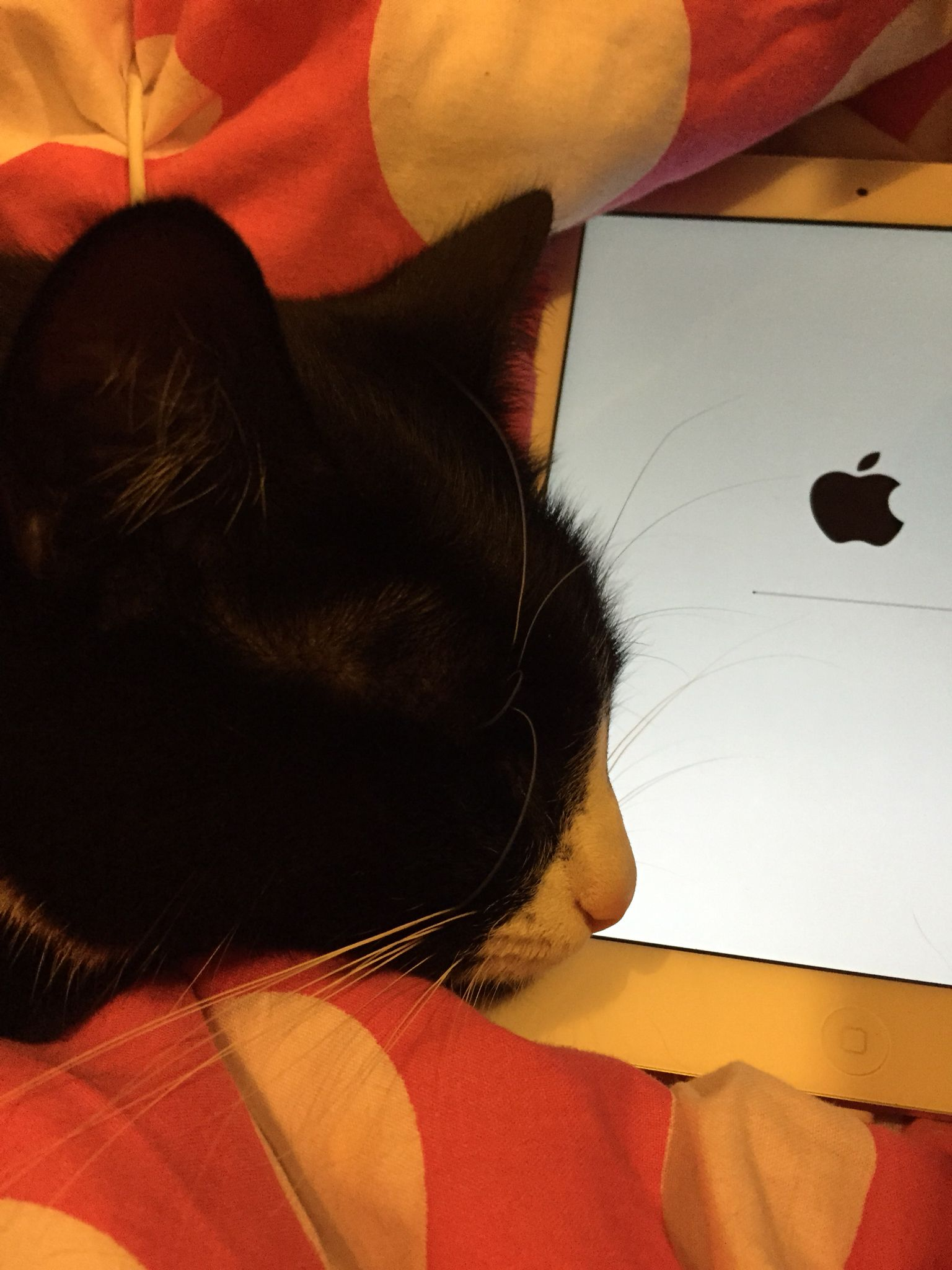 Archie! Get off my iPad!