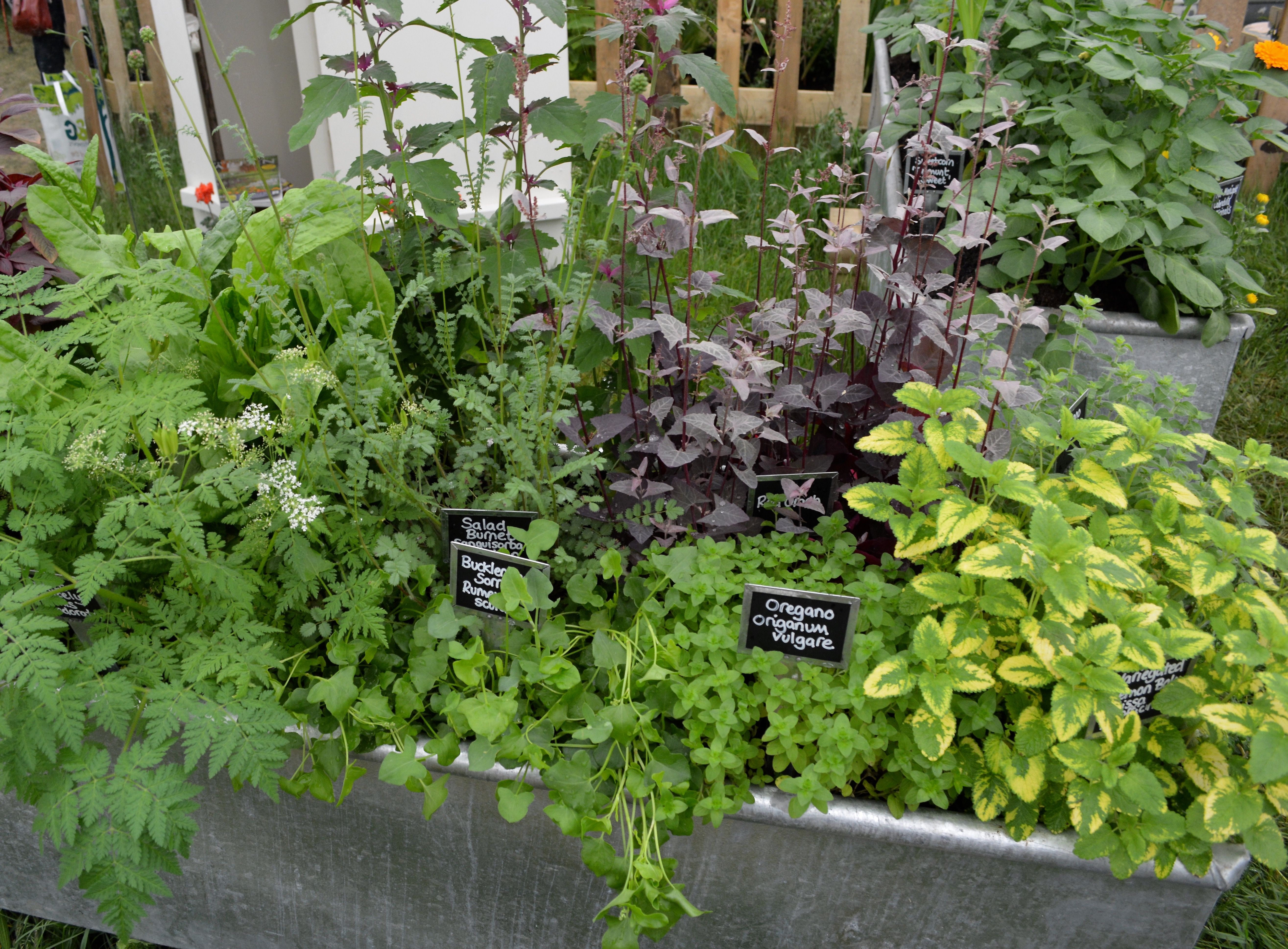 Beautiful Way To Plant Up Herbs At Chelsea Flower Show 2016