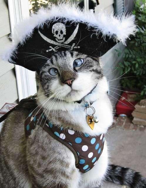 Diese 20 Katzen Tragen Das Bessere Halloween Kostum Als Du Blick Seltsame Katzen Katzen Susseste Haustiere