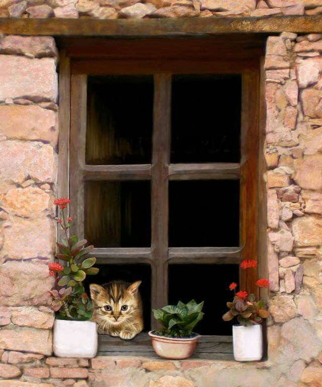 Pin By Michele Schlesinger On Kitty Cats Cat Window Cats Dog Cat