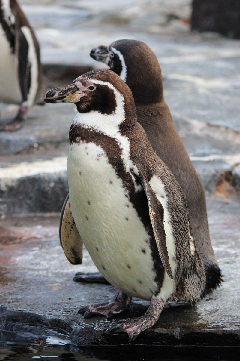 Zoo Praha | Prague Zoo