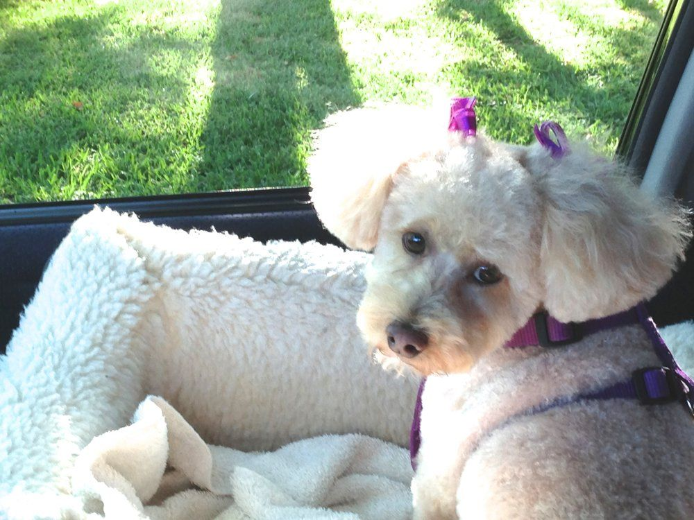 AJ\'s Pet Shop & Grooming - Sherman Oaks, CA, United States. All ...