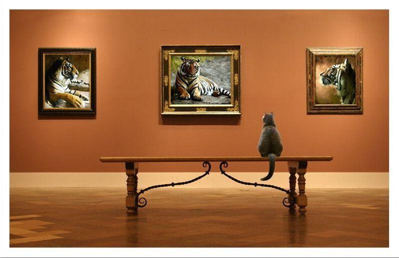 галереи прикольных картинка хорошего качества фигурном