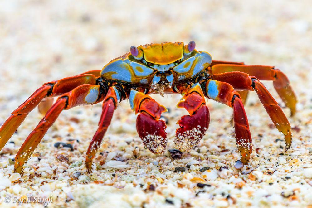 20151123-Galapagos-810_1580.jpg (1000×667)