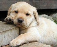 Cutie Dogs Courtney Baker Robinson Jess Pearl Stewart Izzle
