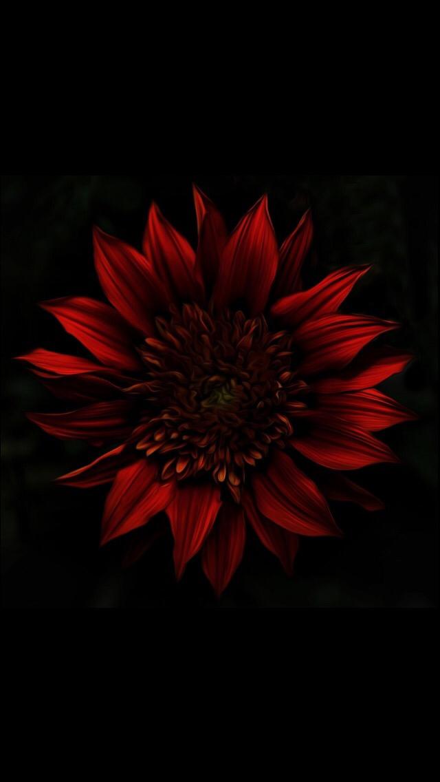 Pin By N K On Ravishing Red Wallpaper Nature Flowers Nature Wallpaper Iphone Wallpaper World