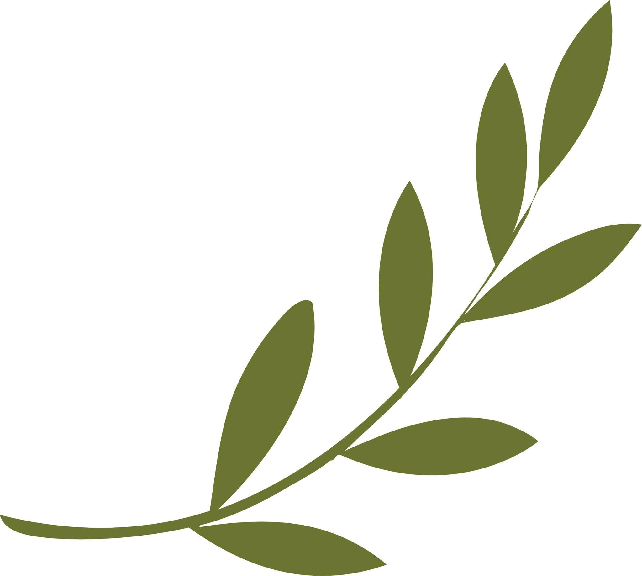 Olive Branch Popular Leaf Shapes In Design Pinterest