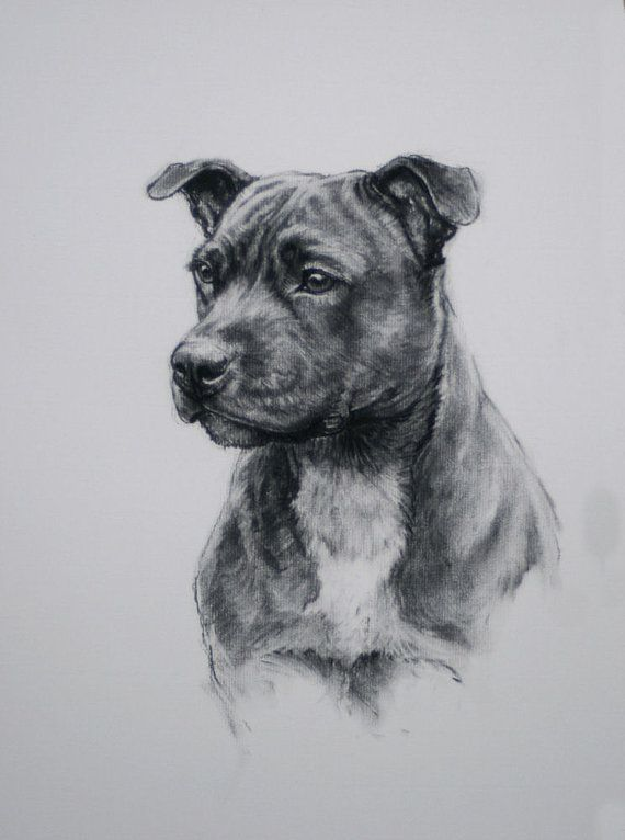 staffordshire bull terrier dog print dog lover gift dog art print from an original charcoal. Black Bedroom Furniture Sets. Home Design Ideas