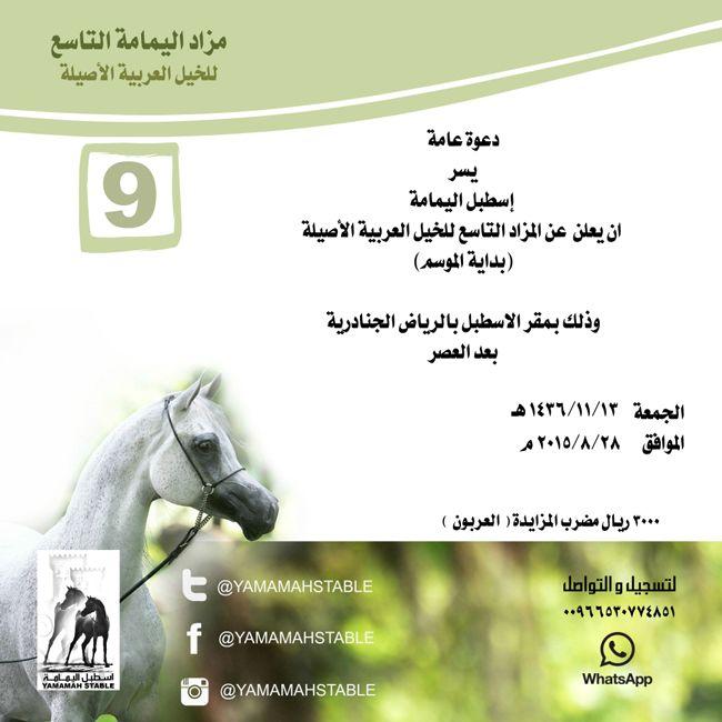 مزاد اليمامة التاسع للخيل العربية بداية الموسم Arabian Horse Horses