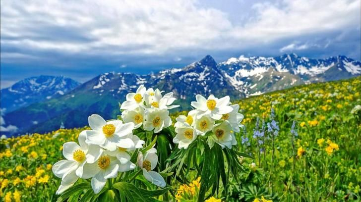 Mountain flowers hd wallpaper - (#57666) - HD Wallpapers - Nature HQ Wallpapers