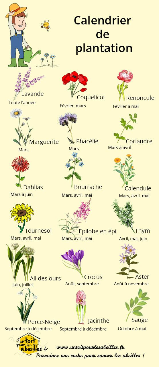 Calendrier de plantation des fleurs flowers pinterest for Calendrier plantation jardin potager