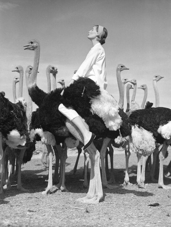 24hoursinthelifeofawoman — Wenda and Ostriches, British Vogue, 1951