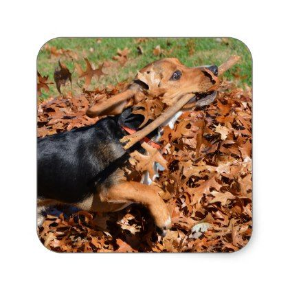 30816e53496a Beagle Playing With Stick In The Leaves Square Sticker