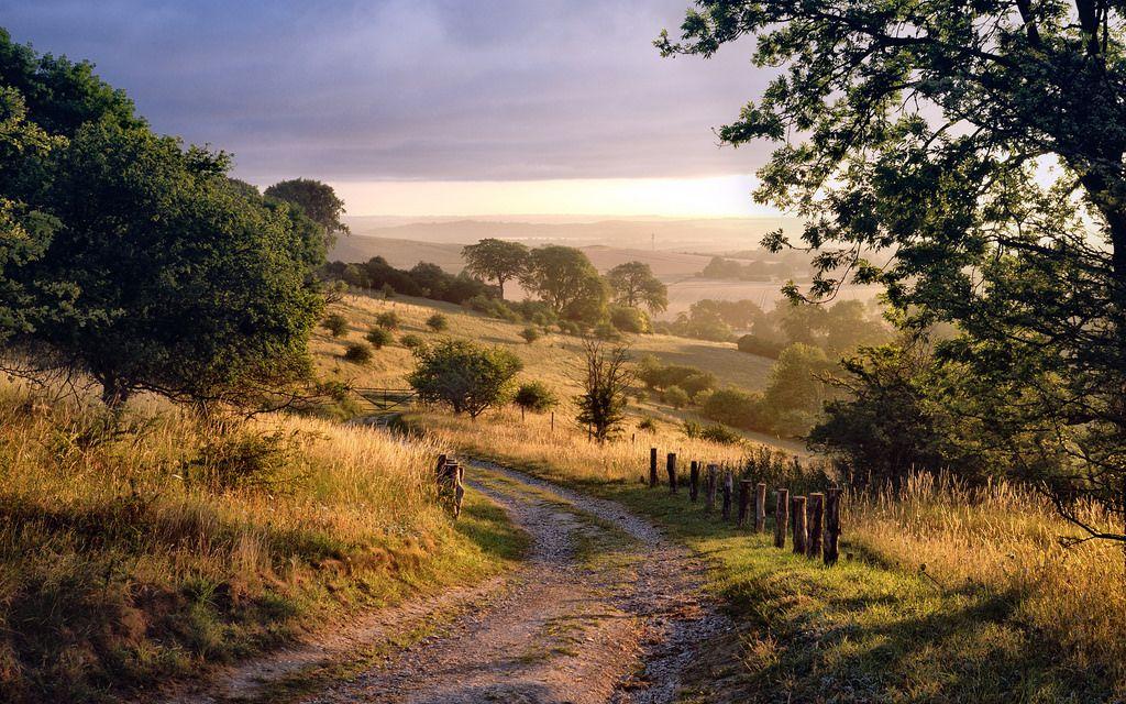 Country lane in Chiltern Hills at dawn, Hertfordshire/Buckinghamshire border, England, U.K.