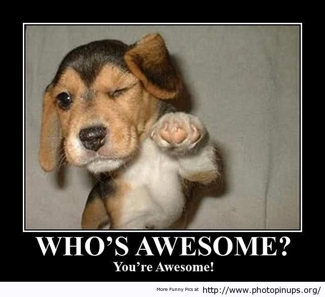 Awesome Meme: Whos Awesome Your Awesome Http://www.photopinups.org/whos