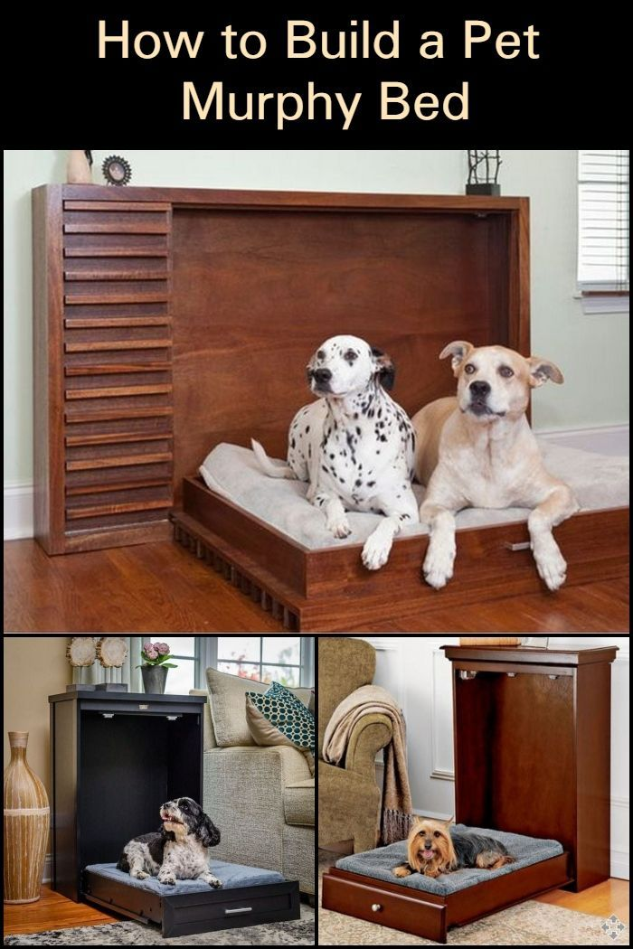 This DIY pet murphy bed is easy to stow away after using