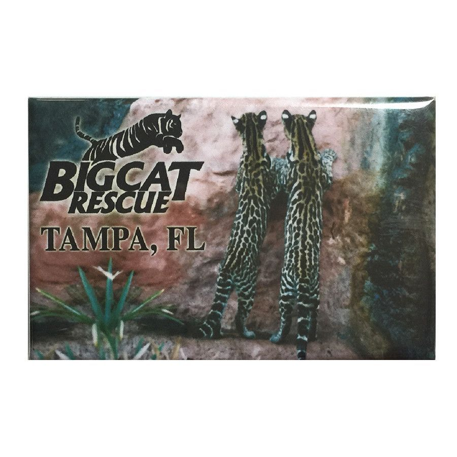 Magnet - Laminated Photo Ocelot