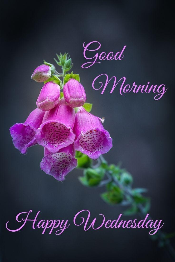 Pin By Sagarika Mandal On Good Morning Gif Good Morning Wednesday Good Morning Flowers Wednesday Morning Greetings