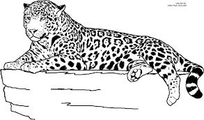 pin auf raubkatzen vorlagen