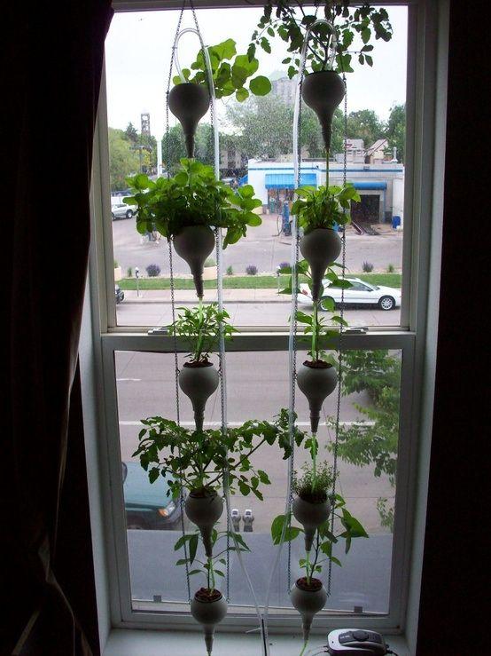 Hydroponic Window Farm Using Hummingbird Feeders From Dollar Store!