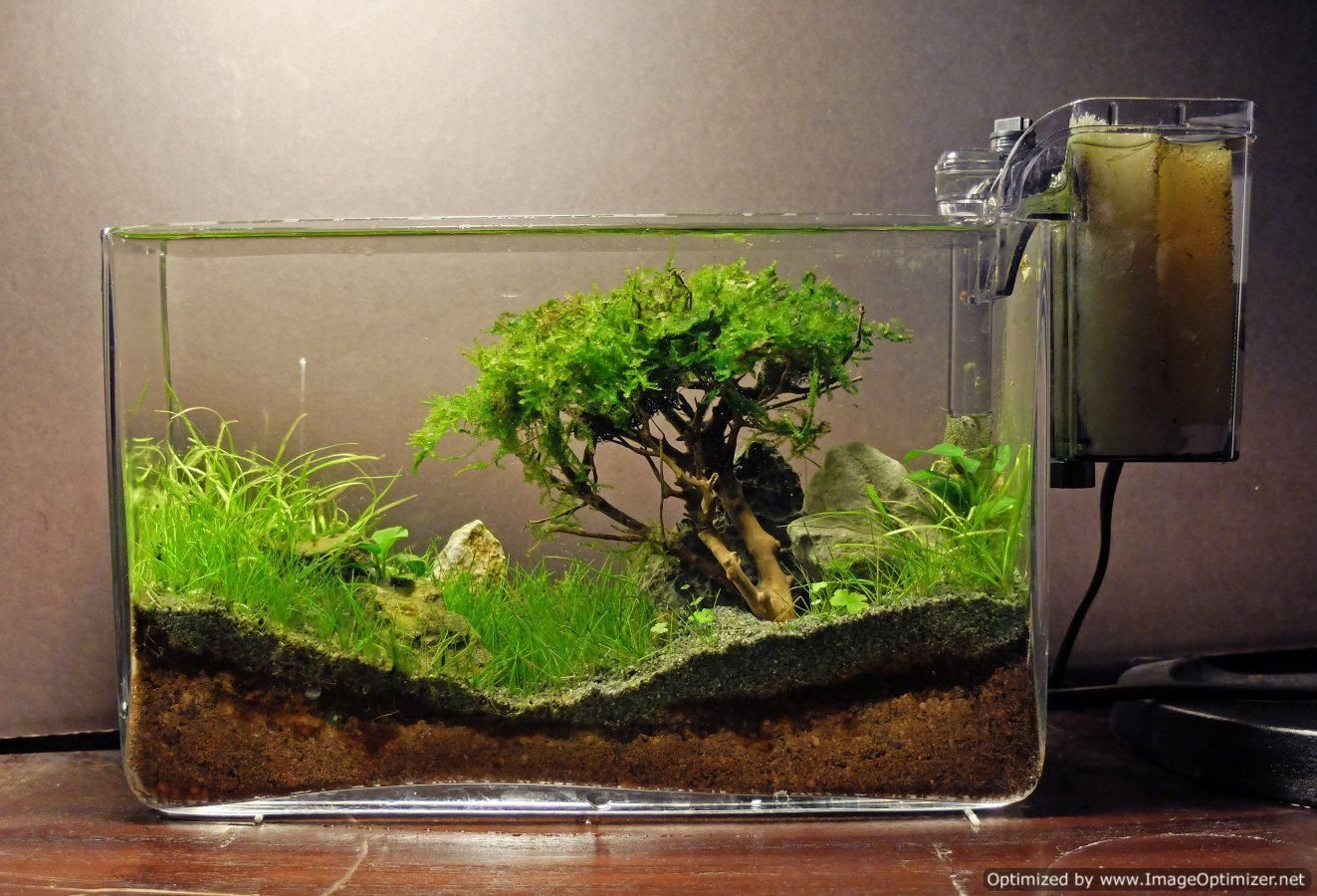 how to grow moss in fish tank