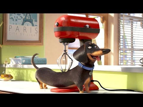 Buddy The Dog The Secret Life Of Pets Movie Clip Youtube