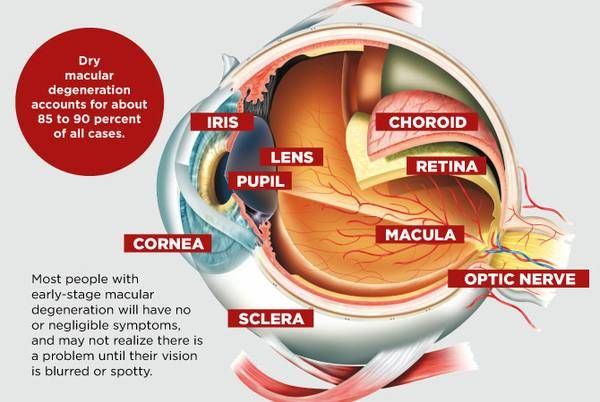 What you need to know about macular degeneration, the leading cause of #blindness: http://bit.ly/2i8kAPz
