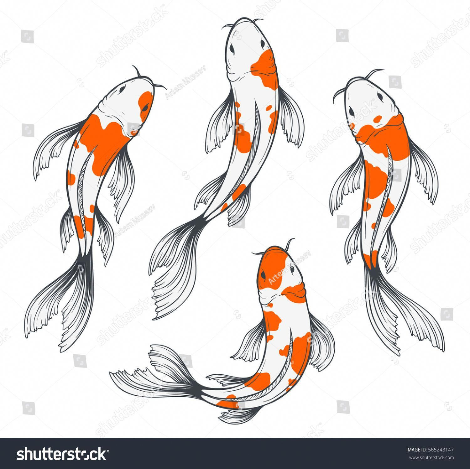Set Of Four Traditional Japanese Koi Fishes Top View Simple Sketch Style Drawing Of Red And White Fishes Koifishinforma Koi Fish Drawing Koi Art Fish Sketch